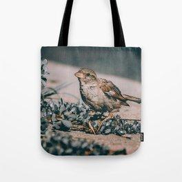 Summer Sparrow. Bird Photograph Tote Bag