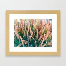 Aloe-lah Framed Art Print