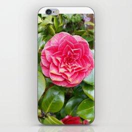 Blush rose iPhone Skin