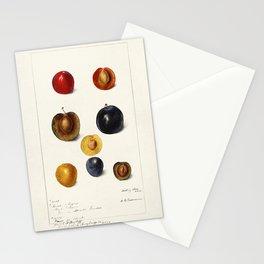 Plums (Prunnus Domeatica) (1898) by Deborah Griscom Passmore Stationery Cards