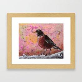 Robin #3 Framed Art Print