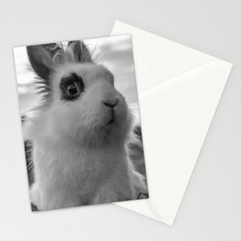 A funny Rabbit Stationery Cards