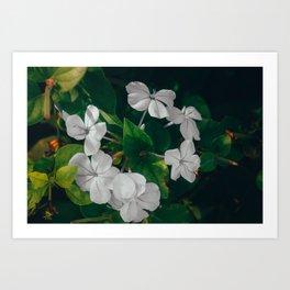 Bundled Flowers #1 Art Print