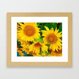 Brilliant Bunch of Sunflowers Tilt Shift Photograph Framed Art Print