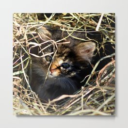 Barn Cat Cuteness  Metal Print