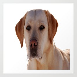 Portrait of A Golden Labrador Dog Art Print