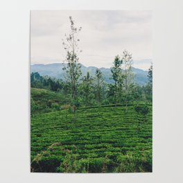 Tea Fields of Sri Lanka, View from the Ella to Kandy Train Poster