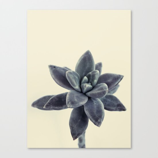 flower succulents plants Canvas Print