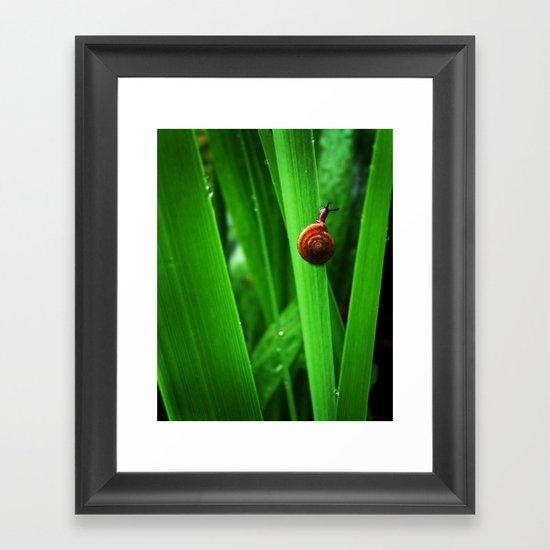 Daring Snail Framed Art Print