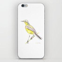 Western yellow wagtail (Motacilla flava) iPhone Skin