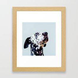 Pongo 2 Framed Art Print