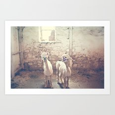 Young Alpacas  Art Print