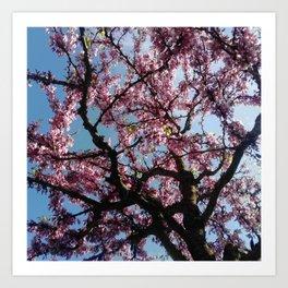 flower and light  - Cherry tree 4 Art Print