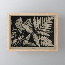 New England Ferns Framed Mini Art Print