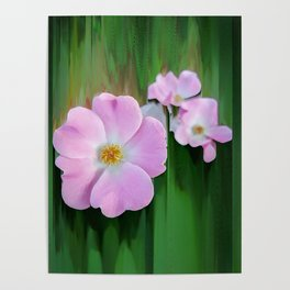 Pink Wild Roses Poster