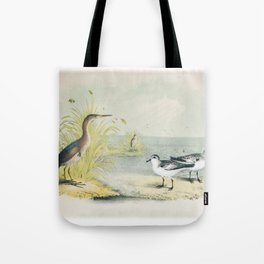 PLATE XL The Least Bittern The Sanderling, or Ruddy Plover Ornithology Birds Vintage Studies America Tote Bag