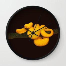 Golden eyelash viper Wall Clock