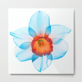 narcissus poeticus (feeling turquoise) Metal Print