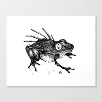 frog Canvas Prints featuring Frog. by Ben BASSO