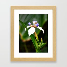 Winter Orchid Framed Art Print