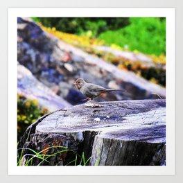 Dancing bird on a stump Art Print