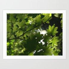 Leaf It To Me.  Art Print