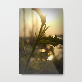 Sunset on Leaves Metal Print