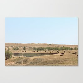 Buffalo Party Canvas Print