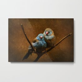 Male and Female Cordon Bleu Canaries Metal Print