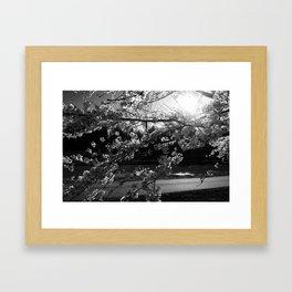 Athens, Ohio Sakura Trees Framed Art Print