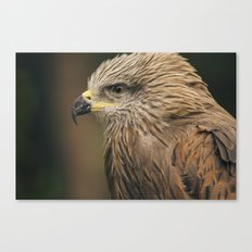 Power Bird I Canvas Print