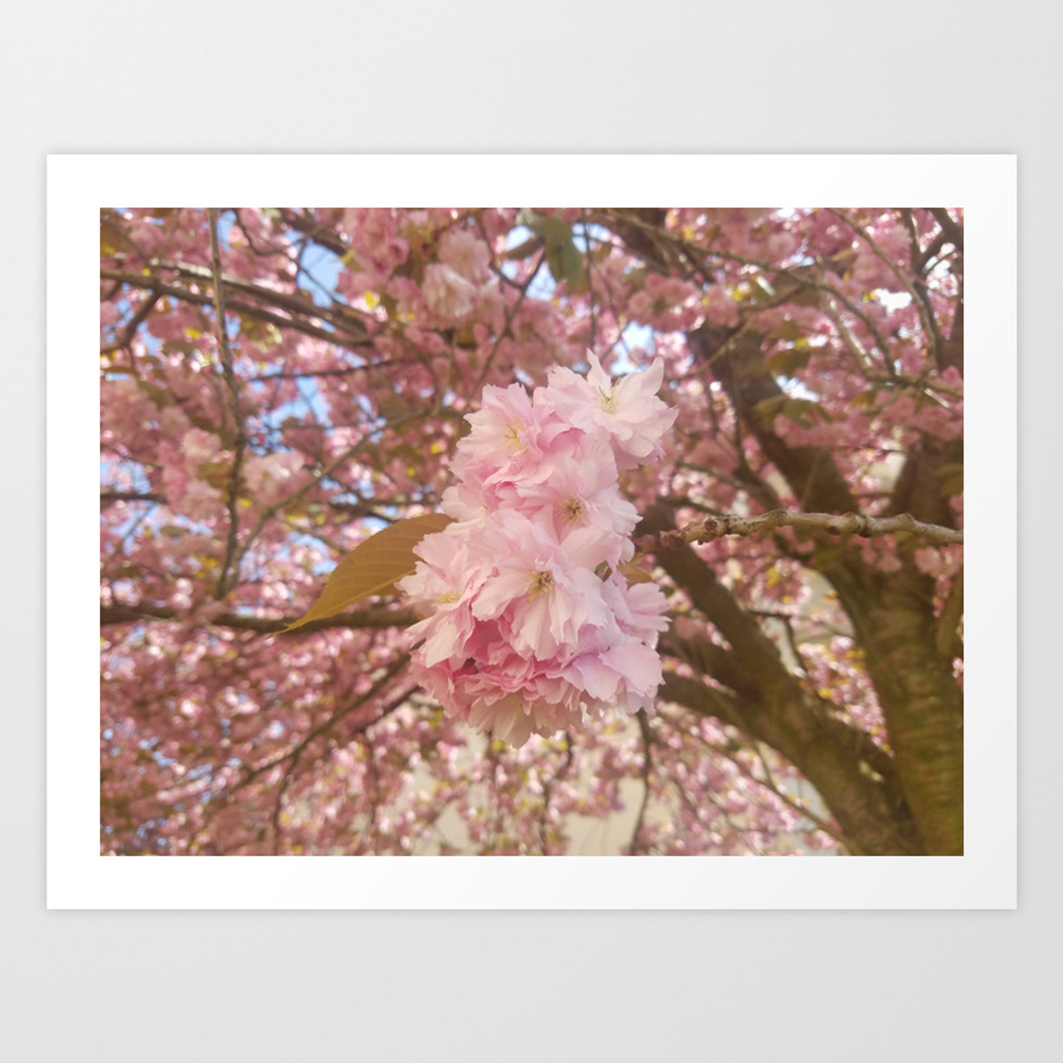 Pink Flowers Of Spring Trees Art Print By Soramiart Society6