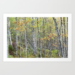The lowest trees have tops Art Print