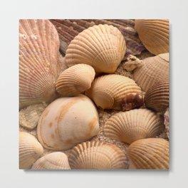 shells Metal Print