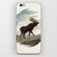 moose iPhone & iPod Skins featuring Moose by Alex Perkins