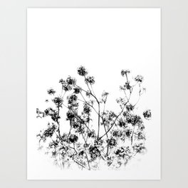 Morning Blossoms Art Print