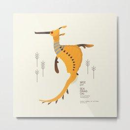 Weedy Seadragon, Marine Animal of Victoria, Australia Metal Print