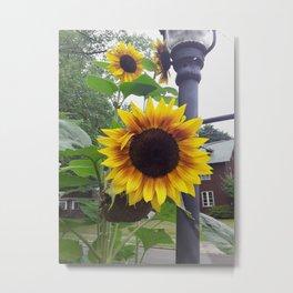 Sunflower Bloom Street Metal Print