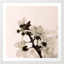 Blossoms Monochrome Art Print