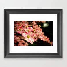 Close Encounter on a Spring Day Framed Art Print