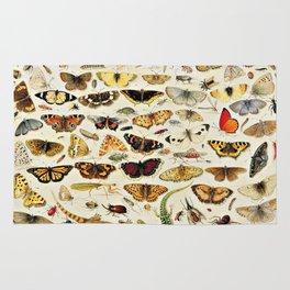 "Jan van Kessel the Elder ""An Extensive Study of Butterflies, Insects and Seashells"" Rug"
