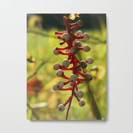Nature's fruit Metal Print