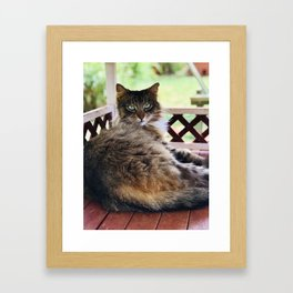 Green Eyes & Fluff (Lanai Cat Sanctuary) Framed Art Print