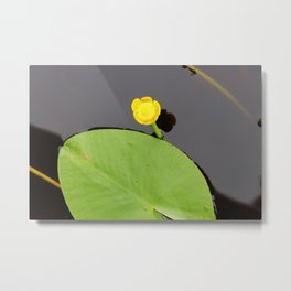 Yellow waterlily with lily pad Metal Print