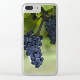 Cluster of purple grapes hanging under grapevine in vineyard Clear iPhone Case