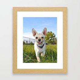 Meet Taco Framed Art Print