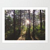 Forest Sun Art Print