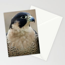 Pretty Peregrine Profile Stationery Cards