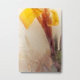 Canna Lily #34 Metal Print