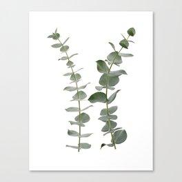 Eucalyptus Branches I Canvas Print